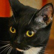 The Pita Cat