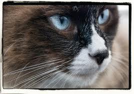 Cat Lovers eBook