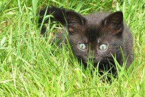 Kittens Learn to Hunt