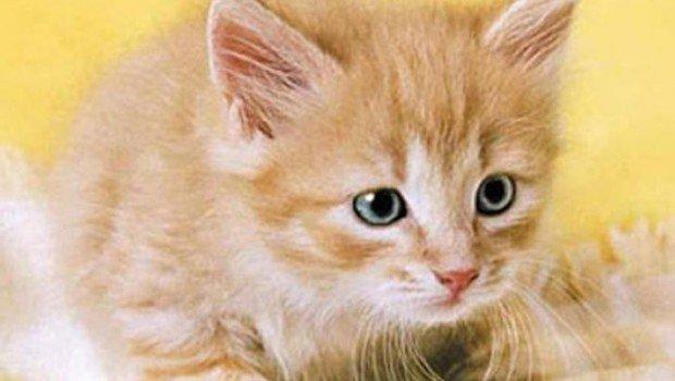 cat health and treats tips