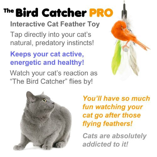 cats play with bird catcher pro