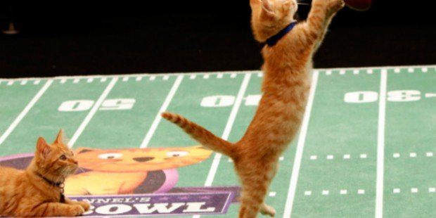 Hallmark Channel Kitten Bowl 2015