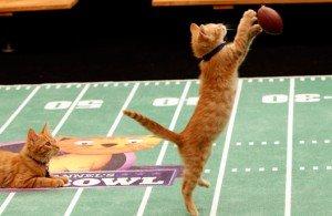 2015 Hallmark Kitten Bowl