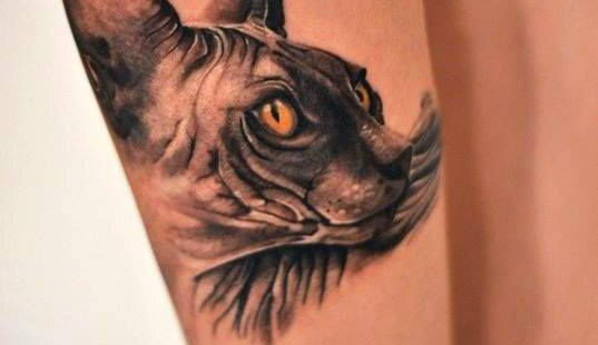 Realistic 3d cat tatoo