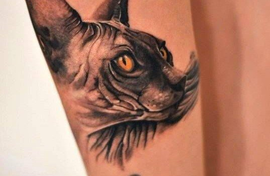 Realistic 3d cat tatoo