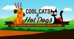 Keep your pet safe during hot summers